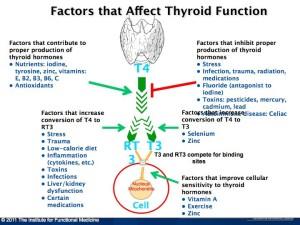 thyroid part ii 2
