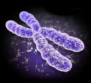 Trisomy3