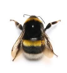 bumble bees2