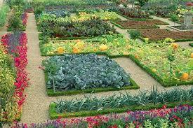 plants 11